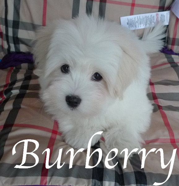 burberry12wksl1140314