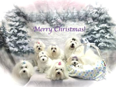 Coton Christmas